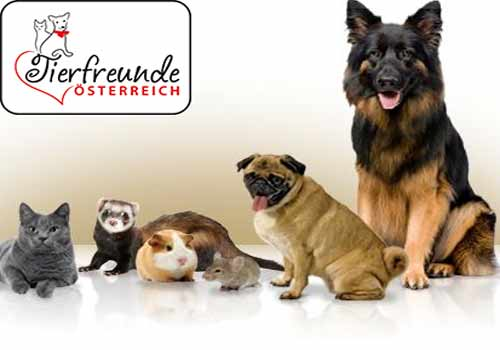 Beruftstätig-mit-Haustier