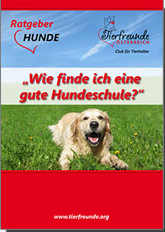 Ratgeber_Hundeschule