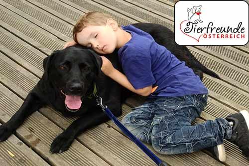 Hunde-Therapeuten