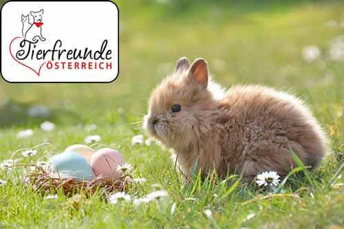 Kaninchen-Osternjpg
