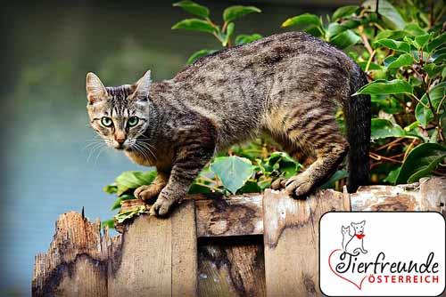 Katzen-Kastrieren