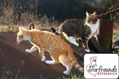 Katzen-Irrtümer