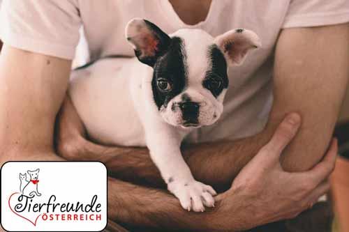 Strafen-für-Hundehasser