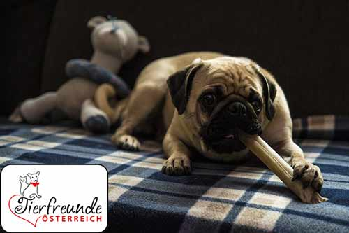 Zahnpflege_Hunde