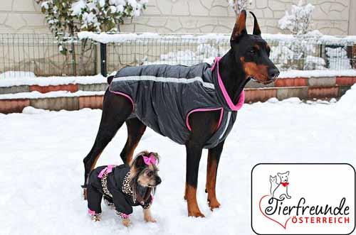 Hundekleidung