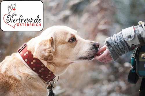 Körpersprache-Hunde