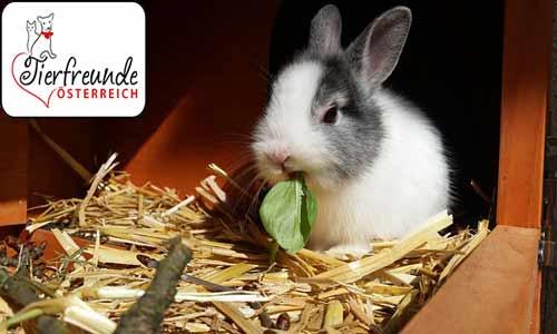 Kaninchen-stubenrein