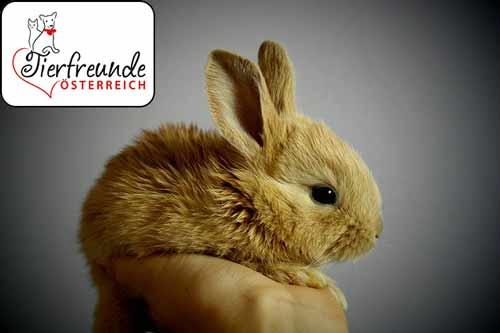 Kaninchen-beisst