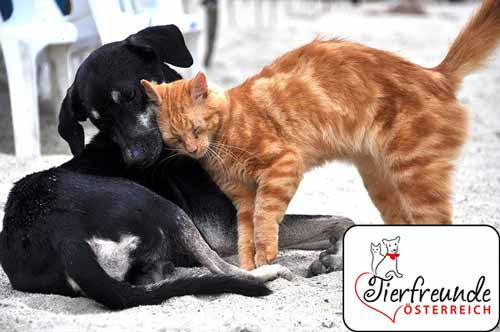 Tierversicherungen