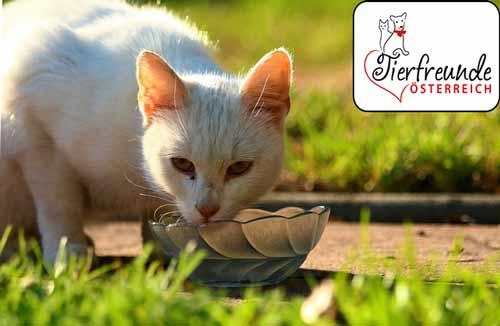 Tipps-bei-Hitze-für-Katze