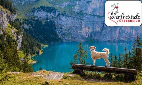 Urlaub-mit-Hund-in-Coroazeiten