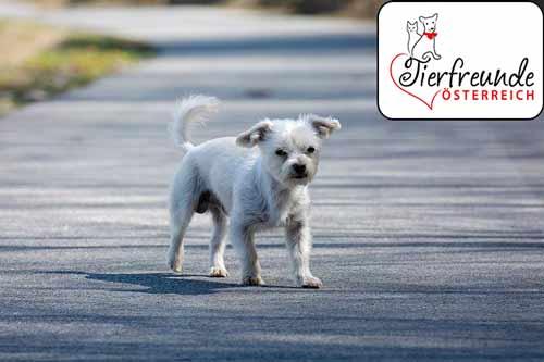 Verbrennungsgefahr-Hundepfoten