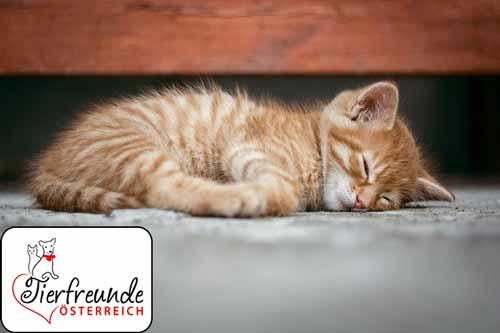 Katzen-verbergen-Schmerzen