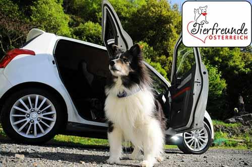 Hunde-im-Auto