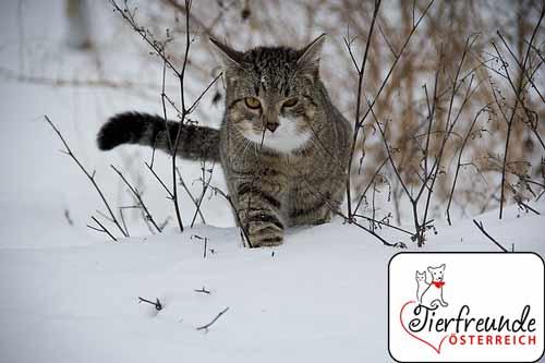 Orientierung-bei-Katzen