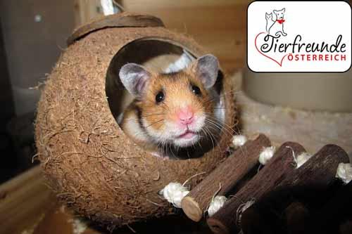 Hamster-besser-verstehen