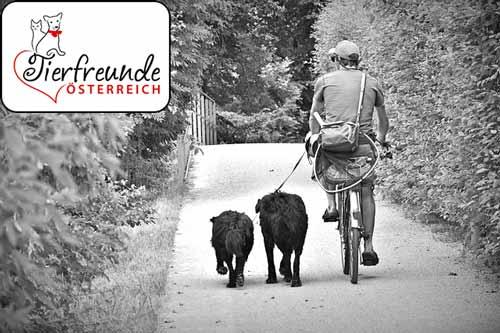 Hunde-am-Fahrrad
