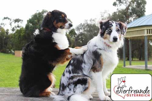 massage-für-hunde